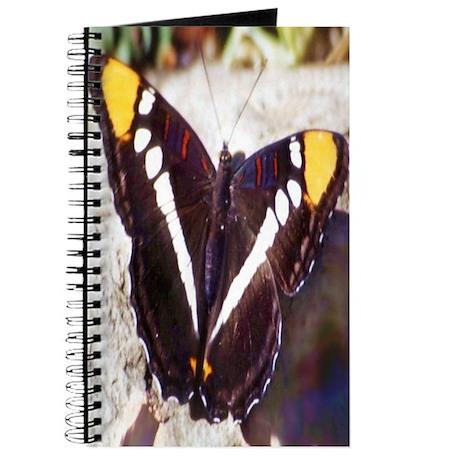Arizona Sister Butterfly Journal