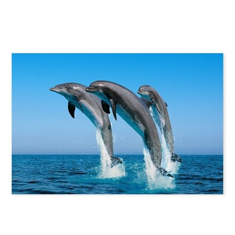 Three Dolphins Postcards (Package of 8)
