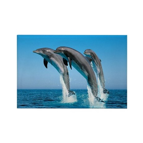 Three Dolphins Rectangle Magnet (10 pack)