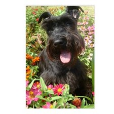 Black Miniature Schnauzer Postcards (Package of 8)