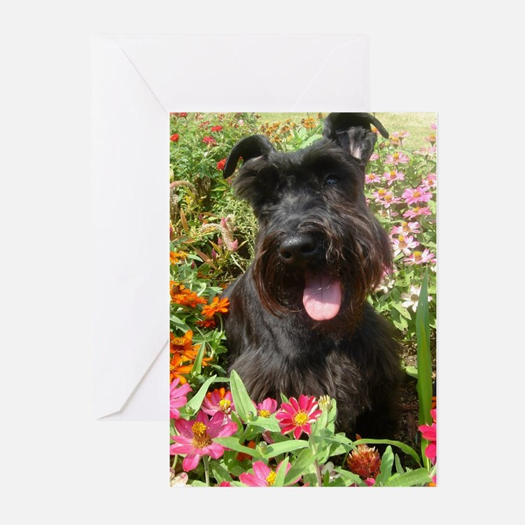 Black Miniature Schnauzer Greeting Cards (Pk of 20