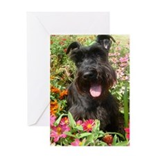 Black Miniature Schnauzer Greeting Card