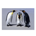 Three Penguins Postcards (Package of 8)