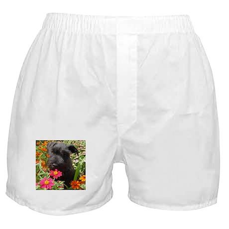 Black Miniature Schnauzer Boxer Shorts