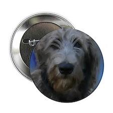 "Funny Irish wolfhound 2.25"" Button"