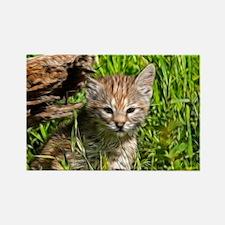 Fractalius Bobcat Kitten Rectangle Magnet