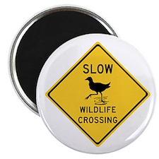 Slow Wildlife Crossing, Australia Magnet