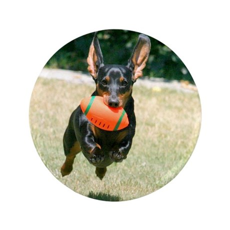 "Football Doxie 3.5"" Button"