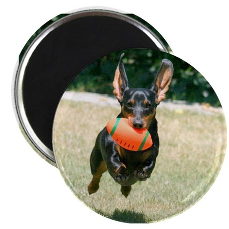 Football Doxie Magnet