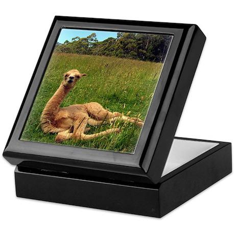 Reclining Alpaca Keepsake Box