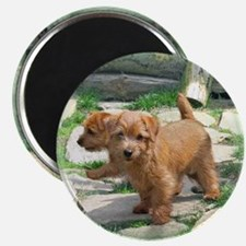Norfolk Terrier Playmates Magnet