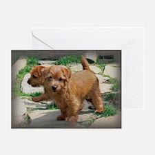 Norfolk Terrier Playmates Greeting Cards (Package