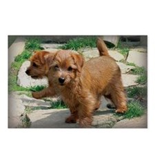 Norfolk Terrier Playmates Postcards (Package of 8)