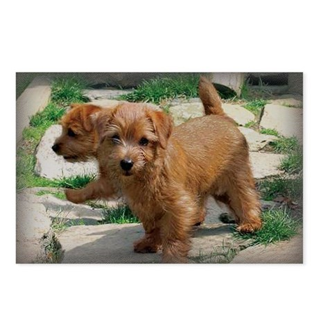 Norfolk Terrier Playmates Postcards (Package of 8)