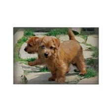 Norfolk Terrier Playmates Rectangle Magnet (100 pa