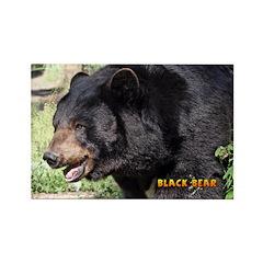 Black Bear Rectangle Magnet (100 pack)