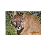 Cougar Rectangle Magnet (100 pack)