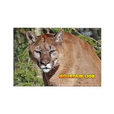 Mountain Lion Rectangle Magnet