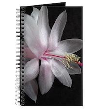 Winter Light Journal