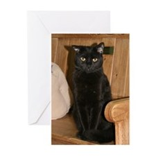 Cat Photo Greeting Cards (Pk of 10)