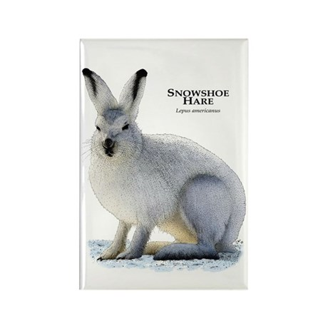 Snowshoe Hare Rectangle Magnet