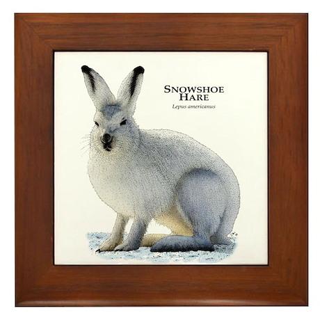 Snowshoe Hare Framed Tile