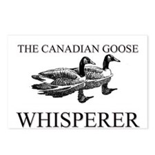 The Canadian Goose Whisperer Postcards (Package of