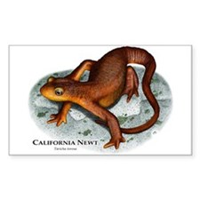 California Newt Rectangle Decal