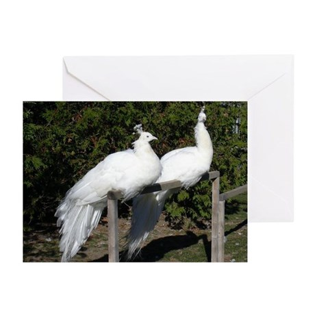 White Peacock Sympathy Cards