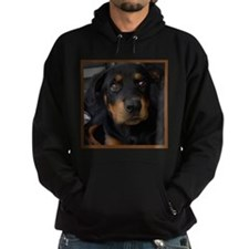 Rottweiler,Rott,Rotty,Rotty,Pup,Puppy