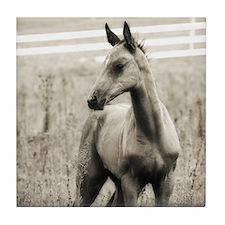 Horse Photograph Tile Coaster