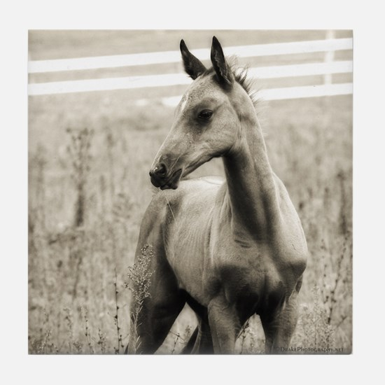 Horse Photograph Tile Coaster