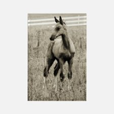 Horse Photograph Rectangle Magnet