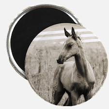 Horse Photograph Magnet