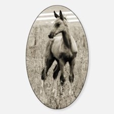 Horse Photograph Oval Decal