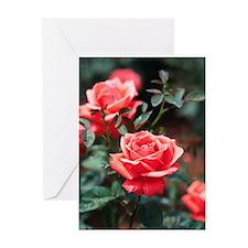 ROSES_306 Greeting Card