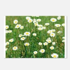 FIELD OF DAISIES Postcards (Package of 8)