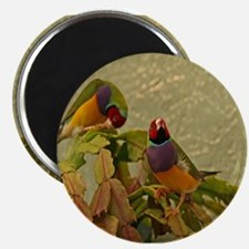 Lady Gouldian Finches Magnet
