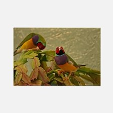 Lady Gouldian Finches Rectangle Magnet