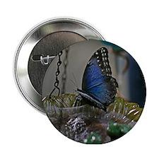 """Beautiful Garden Butterfly 2.25"""" Button"""