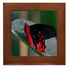 Tropical Butterfly Framed Tile