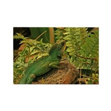 Chinese Water Dragon Rectangle Magnet