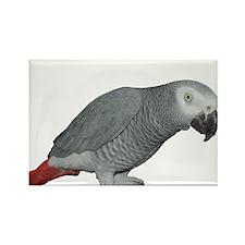 bird2 10x10_edited-1 Magnets