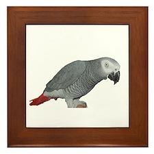 Cute Pet parrot Framed Tile