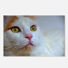 turkish van 2 Postcards (Package of 8)