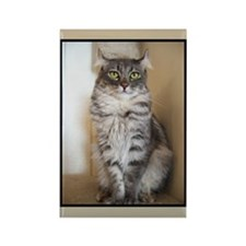 American Curl cat breed Rectangle Magnet