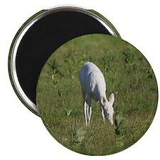 Rare White Deer Magnet