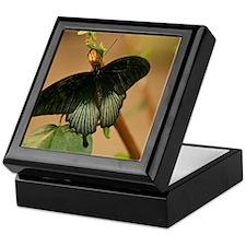 Exotic Black Butterfly Keepsake Box