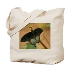Exotic Black Butterfly Tote Bag