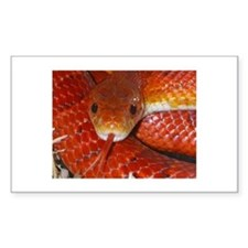Corn Snake Rectangle Decal